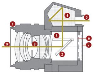 reflex-struttura